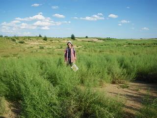 砂漠緑化 - Desert greening